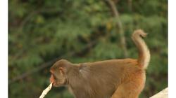 Naše první opice v Indii, myšleno makak :)