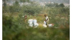 Agra - prohrabovali se kdesi mezi rostlinami v asi prostěradlech