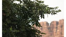 Papouchové ve větvích