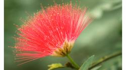 Indie je země květů