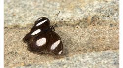 Motýl, jeden z těch méně barevných