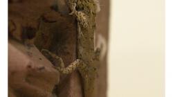 Muzeum v Jhansí - ještěrka mezi artefakty nepatřila