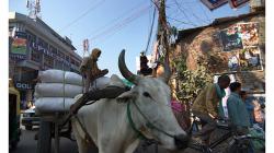 Varanasí - cesta městem - typický účastník provozu