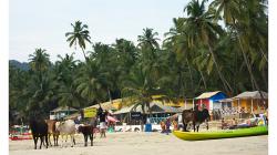 Goa - Palolem Beach - krávy nechyběly ani zde