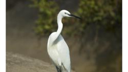 Goa - Palolem Beach - volavka