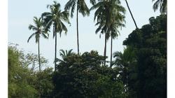 Goa - Palolem Beach - výlet loďkou po řece