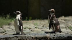 Canon Zoom 2011 - Tučňáci