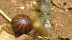 Něco z thajského hmyzu