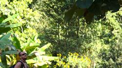 Obr listy, pro srovnání s Dravonem