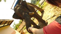 Ája se slonem