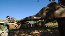 Se slonem