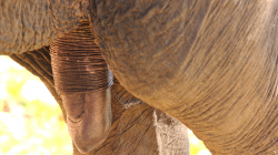 Ve sloní farmě