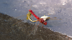 I na vážky příjdou chutě