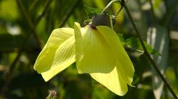 Thajská květena