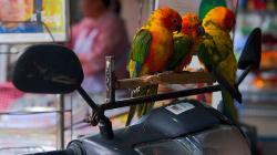 Papouchové na motorce