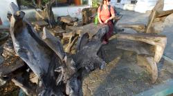 Lavice využívající přirozené tvary dřeva. Zvláštní a krásné