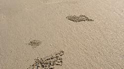 Palma - z písku vytvořil krab