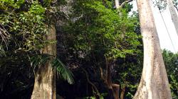 Nádherné stromy