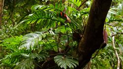 Cesta džunglí