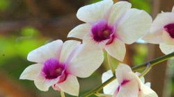 Orchideje nemohly chybět - Sonya\'s