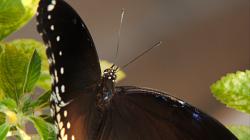 Motýli mně v Thajsku neustále učarovávali
