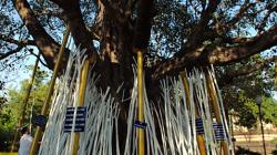 Na tyhle dřeva se napíše pravděpodobně přání a opře o strom, za 100THB