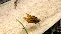 Nějaký hmyzák