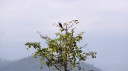 Něco thajského ptactva