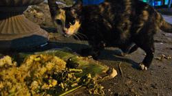 Hladové kočky / Hungry Cats