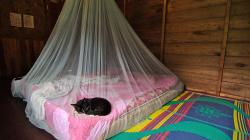 Najít kočku v posteli - to je sen - Find a cat in the bed - what a dream!