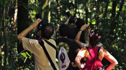 Ve větvích je orangutan / Orangutan in the branches