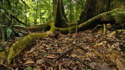 Kořeny / The roots