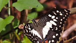 Motýl / Buterfly