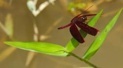 Vážka / Dragonfly