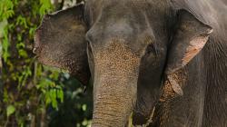 Slon / Elephant