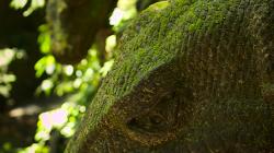 opičí les / monkey forest