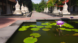 Budhistický chrám / Budhistic temple
