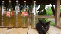 Fantu nebo Colu? Stejně máme jen benzín / Fanta or Cola? We have just petrol, though