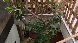 Strom uvnitř hotelu / Tree inside of hotel