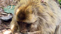 Opicos / Monkeys