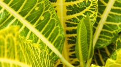 Kytka / Plant