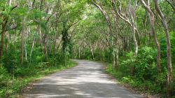Les Salagdong / Salagdong Forest