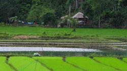 Rýže / Rice