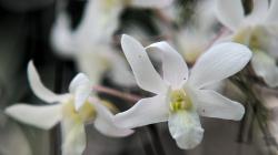 Orchideje / Orchids
