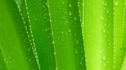 Zelená / Green