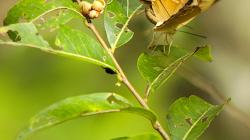Motýli / Butterflies