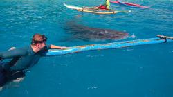 Žralok Velrybí / Whale Shark