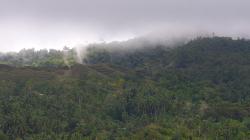 V kopcích / In the hills