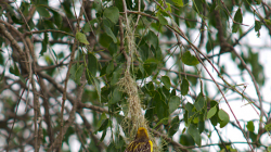 Hnízdo - Nest