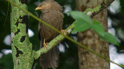 Věčně naštvaný pták - Always pissed off bird